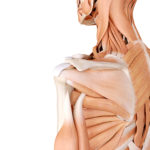 Shoulder Injury Lawyers in Alberta